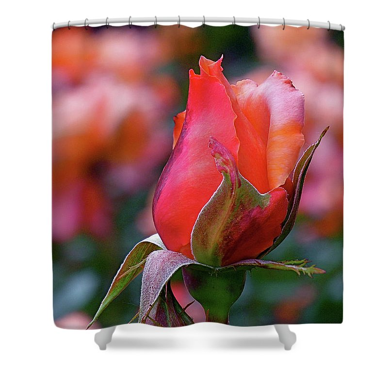 Red Rose Shower Curtain featuring the photograph Rose On Rose by Rona Black
