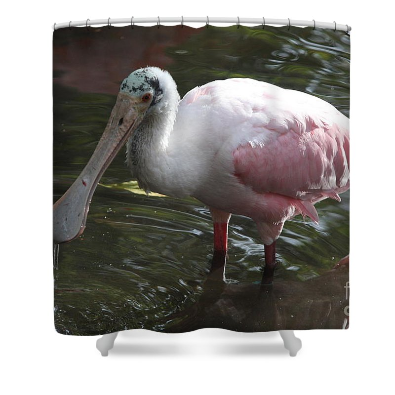 Roseate Spoonbill Shower Curtain featuring the photograph Roseate Spoonbill by Christiane Schulze Art And Photography