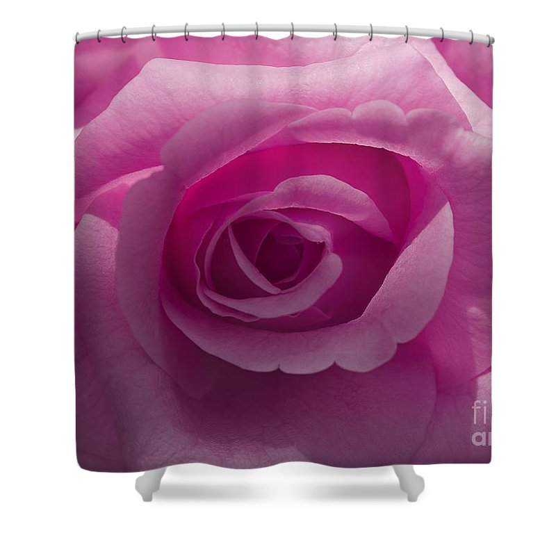 Pink Shower Curtain featuring the photograph Roses Have Ruffles And Ridges by Joshua Roberts