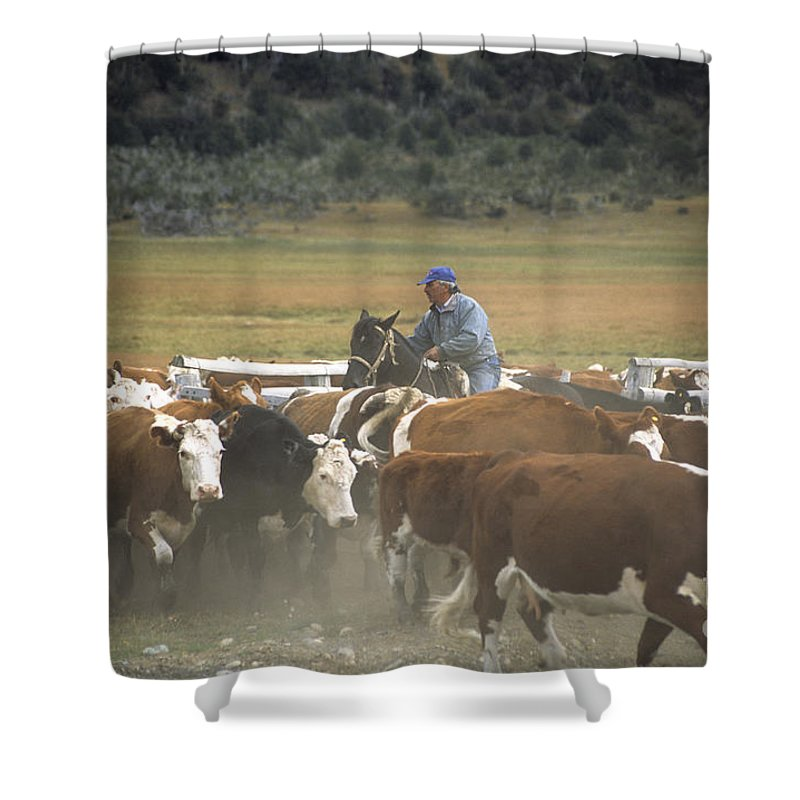 Cowboy Shower Curtain featuring the photograph Cattle Round Up Patagonia by James Brunker