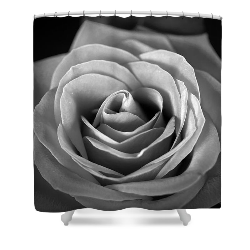 Roses Shower Curtain featuring the photograph Rozica by Mark Ashkenazi