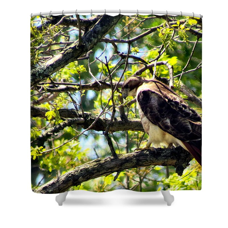 Red Shower Curtain featuring the photograph RTH by Art Dingo