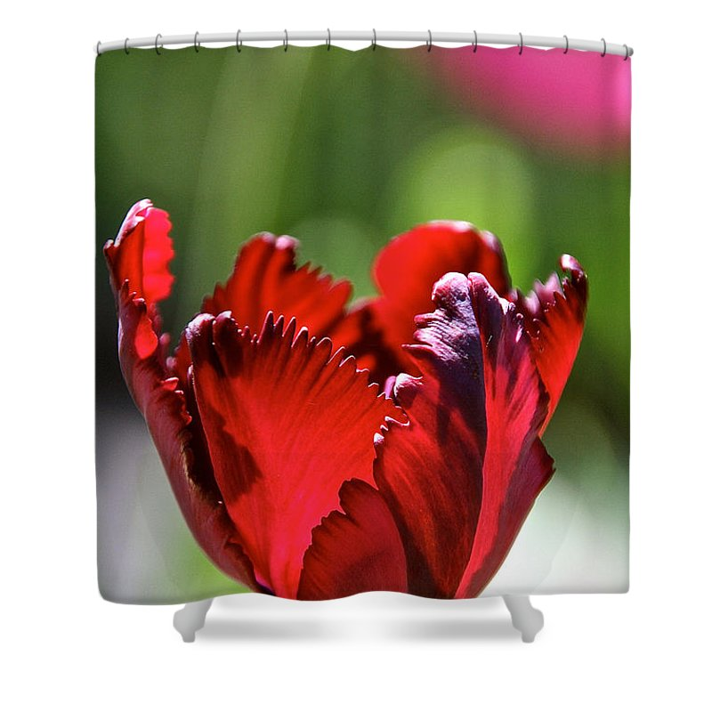 Flower Shower Curtain featuring the photograph Ruby Scallops by Susan Herber