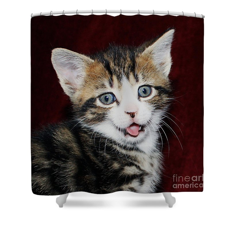 Naughty Kitten Shower Curtain Featuring The Photograph Rude By Terri Waters
