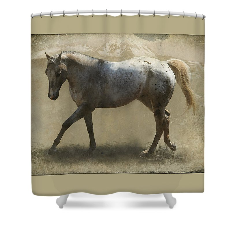 Horse Shower Curtain featuring the photograph Rudy by Nichon Thorstrom