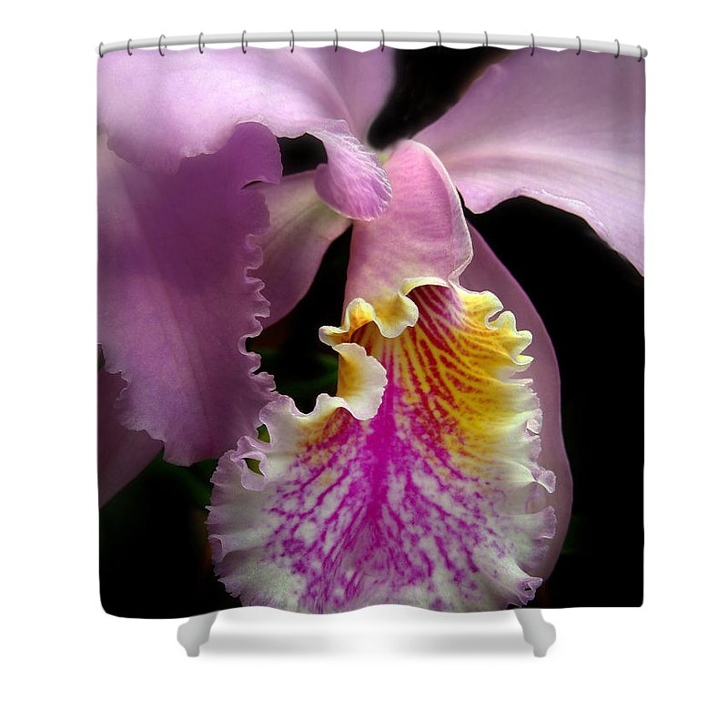 Flowers Shower Curtain featuring the photograph Ruffled by Jessica Jenney