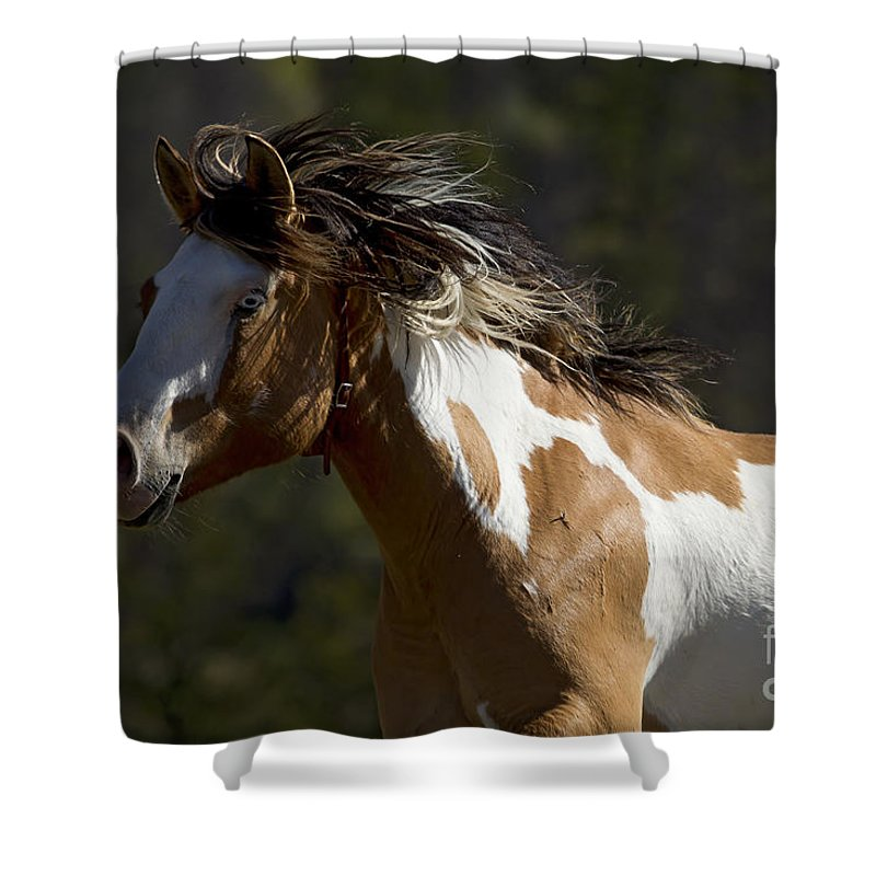 Horse Shower Curtain featuring the photograph Runaway Horse  #4976 by J L Woody Wooden