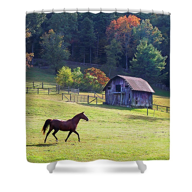 Duane Mccullough Shower Curtain featuring the photograph Running Horse And Old Barn by Duane McCullough
