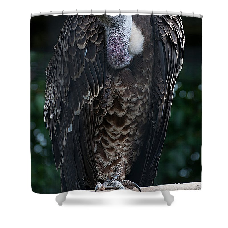 Ruppel's Shower Curtain featuring the photograph Ruppel's Griffon by Photos By Cassandra