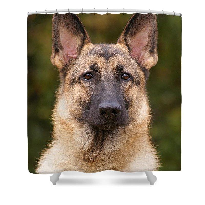 Sable German Shepherd Dog Shower Curtain For Sale By Sandy Keeton