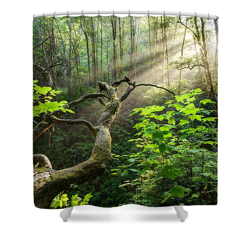 California Shower Curtain featuring the photograph Sacred Grove by Dustin LeFevre