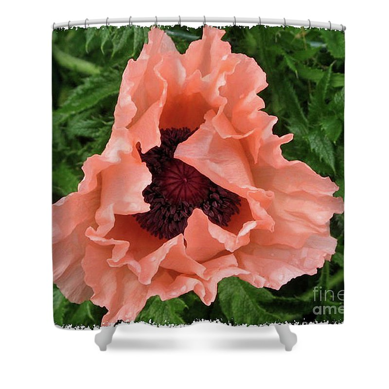 Salmon Colored Poppy Shower Curtain For Sale By Barbara Griffin