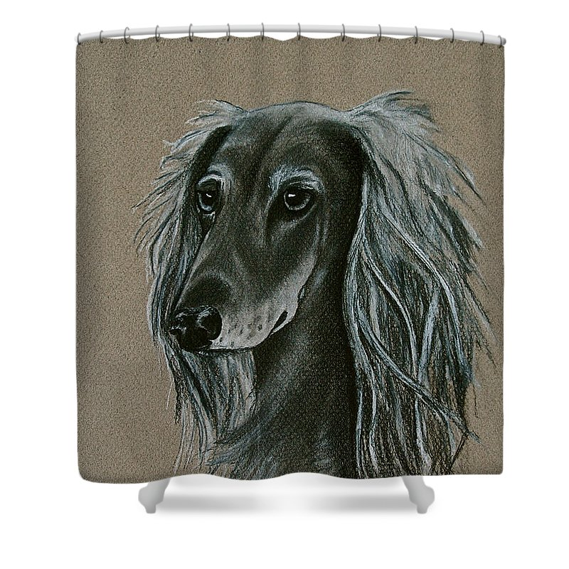 Hound Shower Curtain featuring the drawing Saluki by Susan Herber
