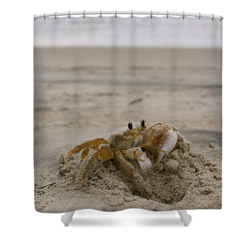 Sand Shower Curtain featuring the photograph Sand Crab by Nelson Watkins