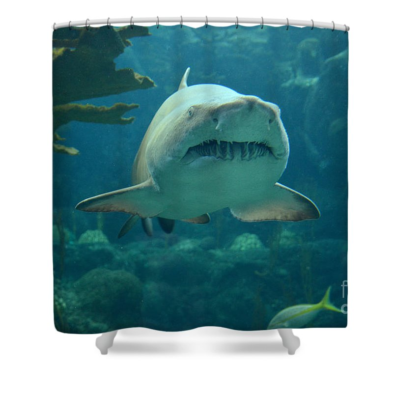 Sand Shark Shower Curtain Featuring The Photograph By Robert Meanor