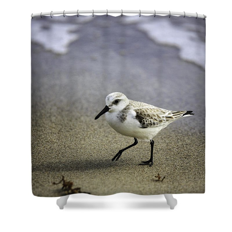 Birds Shower Curtain featuring the photograph Sanderling On The Shore by Fran Gallogly
