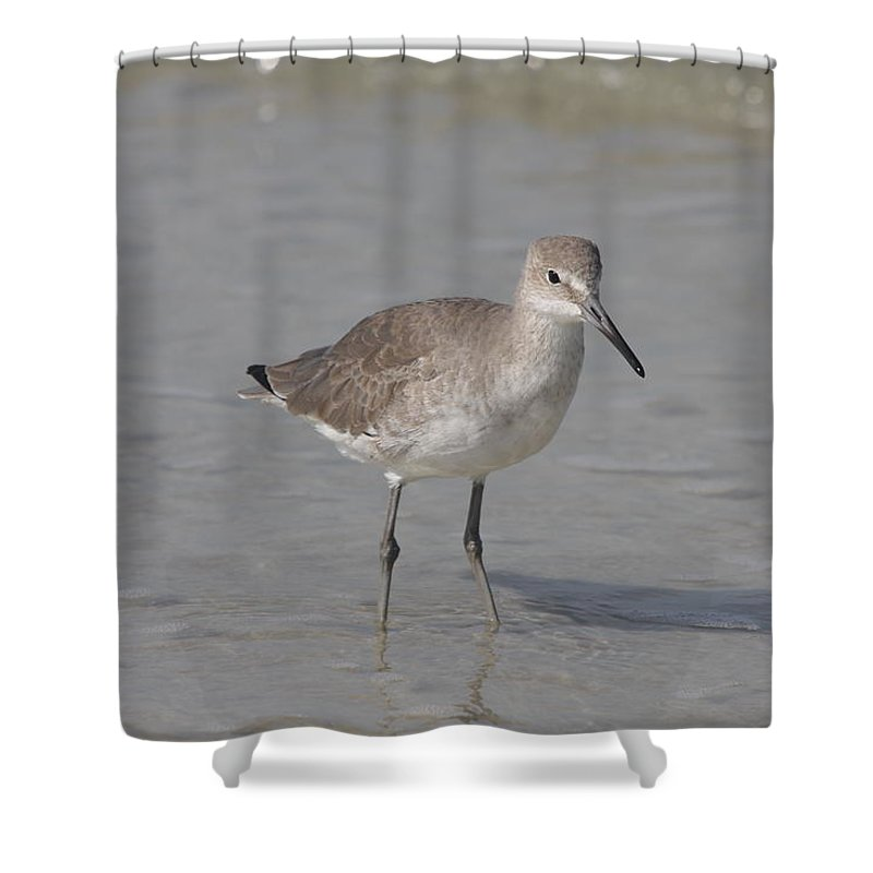 Sandpiper Shower Curtain featuring the photograph Sandpiper by Christiane Schulze Art And Photography