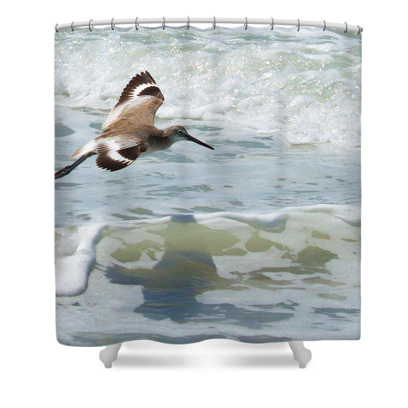 susan Molnar Shower Curtain featuring the photograph Sandpiper Flight by Susan Molnar