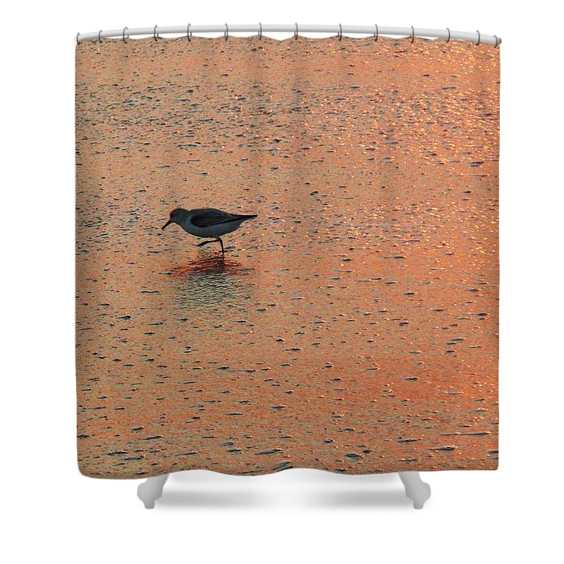 Beach Shower Curtain featuring the photograph Sandpiper On Shoreline by Eric Schiabor