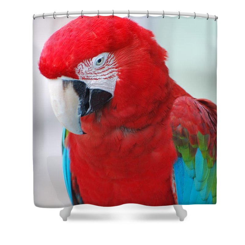 Macaw Shower Curtain featuring the photograph Scarlet Macaw by DejaVu Designs