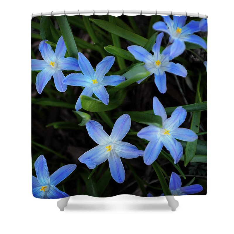 Scilla Flowers In The Morning Shower Curtain featuring the photograph Scilla Flowers In The Morning by Mary Machare