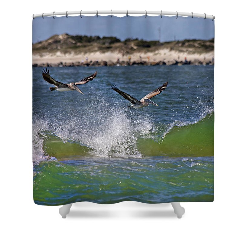 Pelican Shower Curtain featuring the photograph Scouting For A Catch by Betsy Knapp