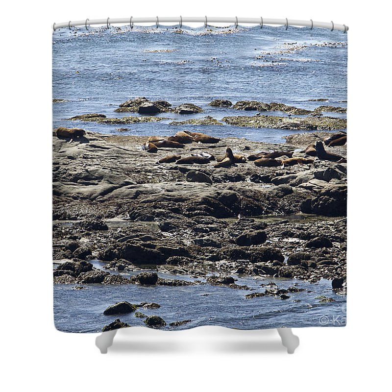 Beaches Shower Curtain featuring the photograph Sea Lion Resort by Kathy McClure