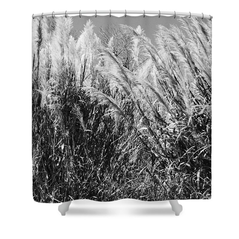 Birds Shower Curtain featuring the photograph Sea Oats In The Glades by Chuck Hicks