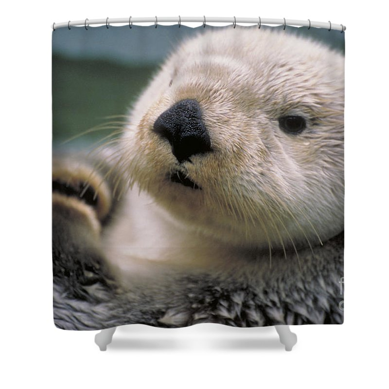 Sea Otter Shower Curtain Featuring The Photograph By Art Wolfe
