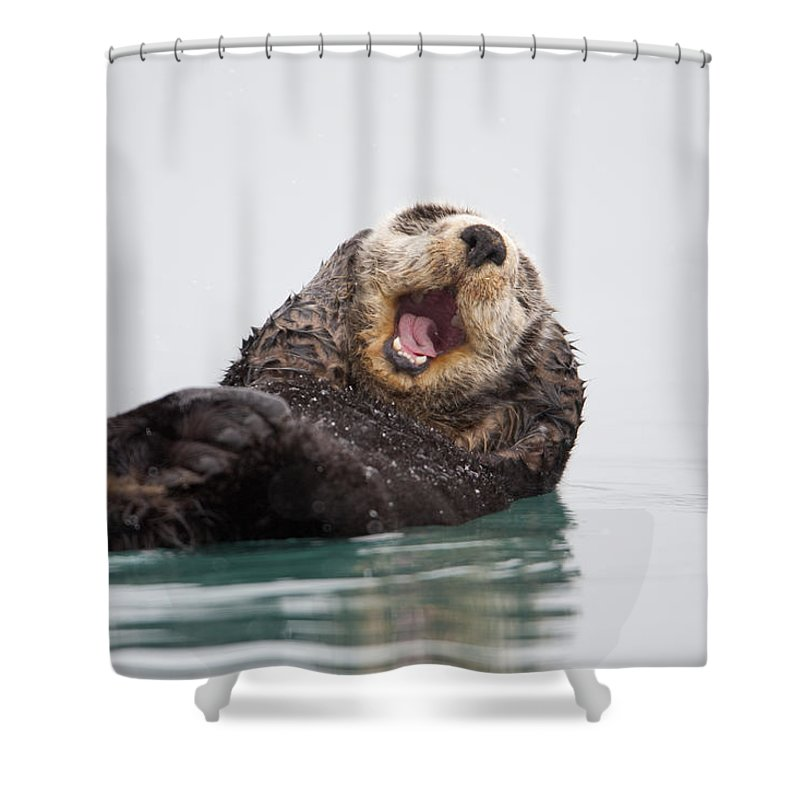 Humorous Shower Curtain Featuring The Photograph Sea Otter Scratching Head And Yawning By Milo Burcham