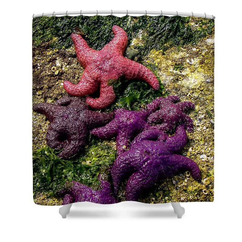 Sea Star Shower Curtain featuring the photograph Sea Stars by Robert Bales