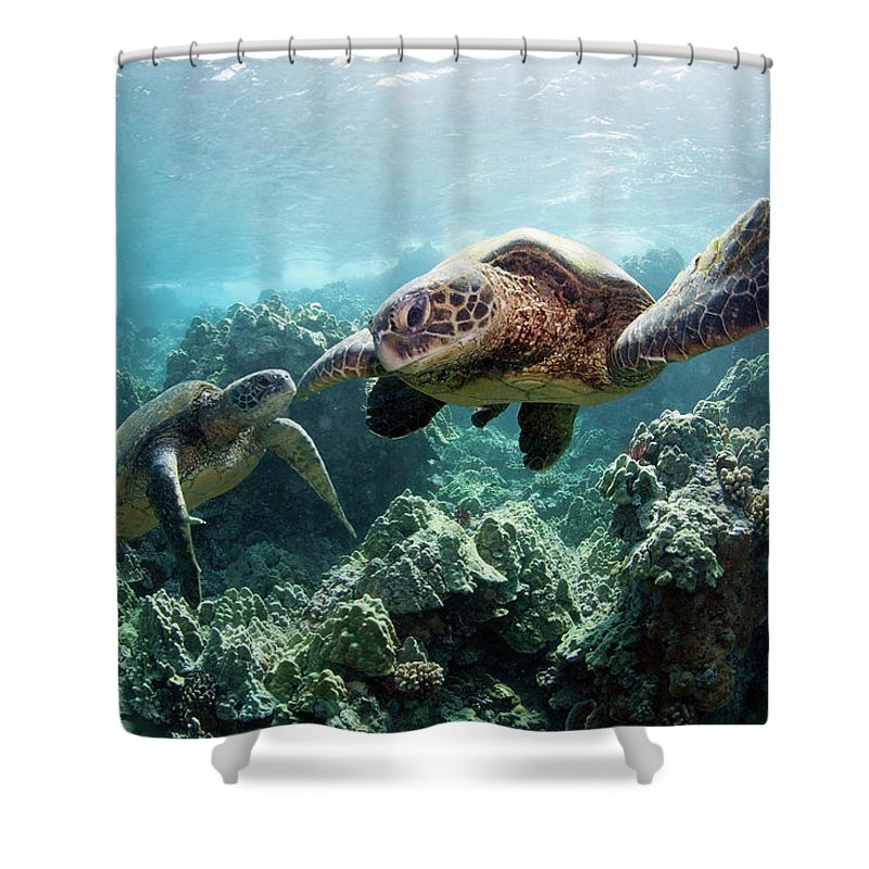 Underwater Shower Curtain featuring the photograph Sea Turtles by M Swiet Productions