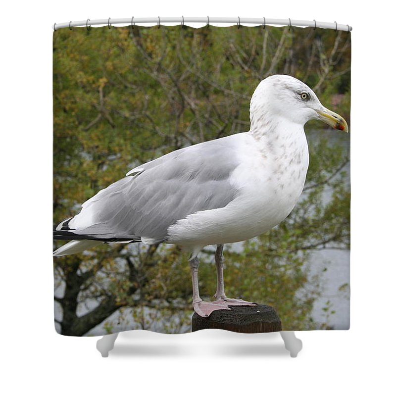 Seagull Shower Curtain featuring the photograph Seagull Outlook by Christiane Schulze Art And Photography