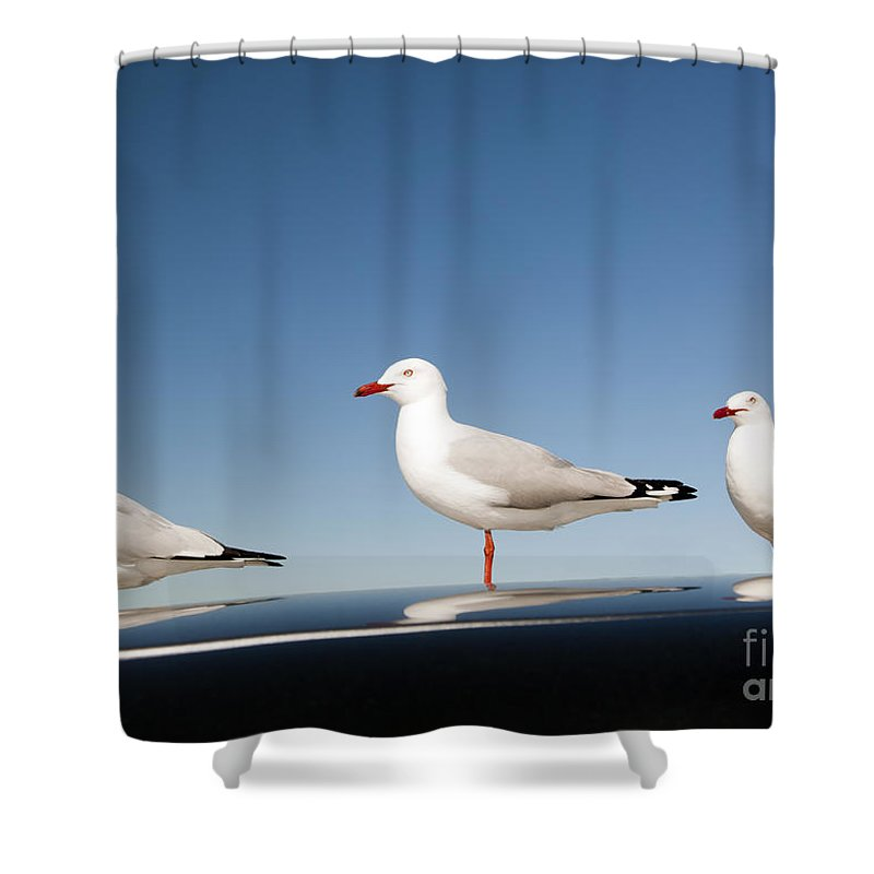 Australia Shower Curtain featuring the photograph Seagull by Tim Hester