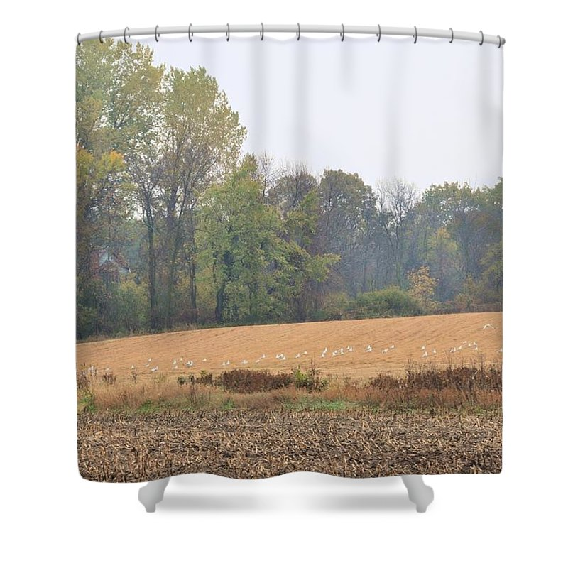 Landscape Shower Curtain featuring the photograph Seagulls Dream by Valerie Kirkwood