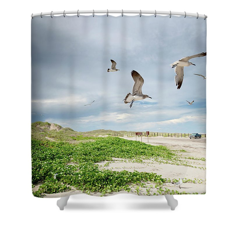 Scenics Shower Curtain featuring the photograph Seagulls In Flight At North Padre by Olga Melhiser Photography