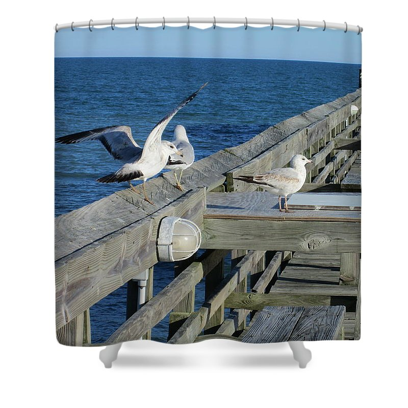 Seagulls Shower Curtain featuring the photograph Seagulls by Nelson Watkins