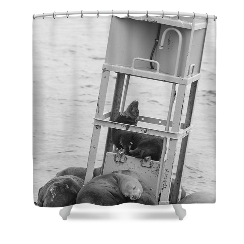 Seal Shower Curtain featuring the photograph Seal Hammock Black And White by Scott Campbell