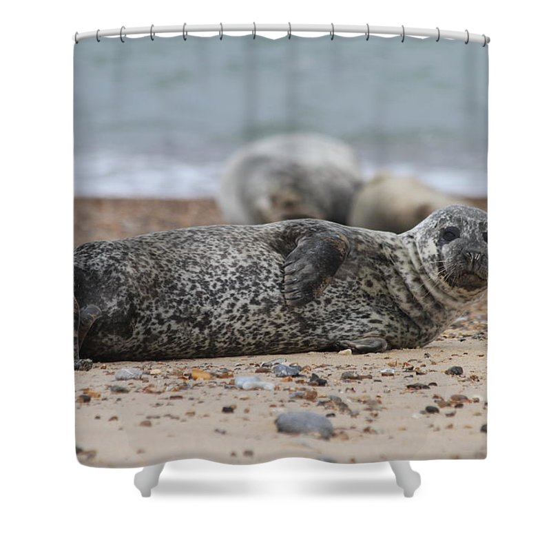 Seal Shower Curtain featuring the photograph Seal Pup On Beach by Gordon Auld
