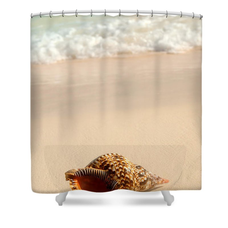 Seashell Shower Curtain Featuring The Photograph And Ocean Wave By Elena Elisseeva