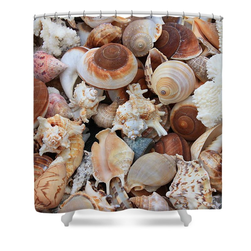 Shell Shower Curtain featuring the photograph Seashells - Vertical by Carol Groenen