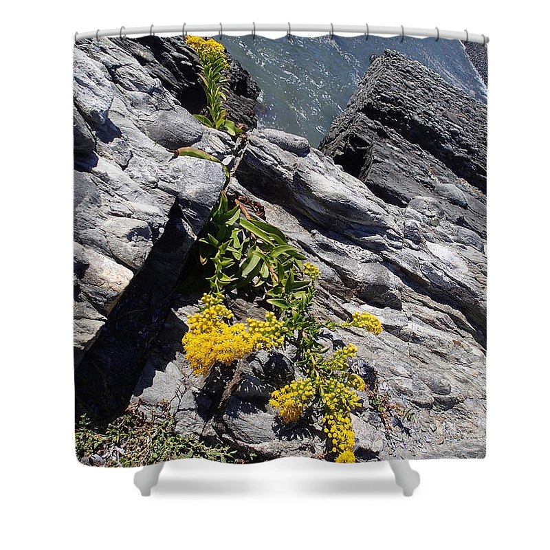 Nature Shower Curtain featuring the photograph Seaside Goldenrod 1 by Robert Nickologianis