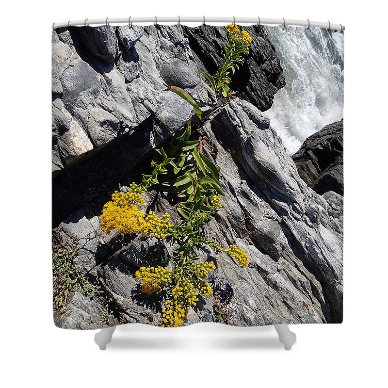 Nature Shower Curtain featuring the photograph Seaside Goldenrod by Robert Nickologianis