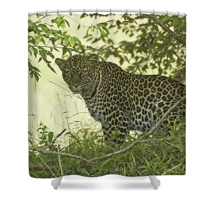 Africa Shower Curtain featuring the photograph Secret Garden by Michele Burgess