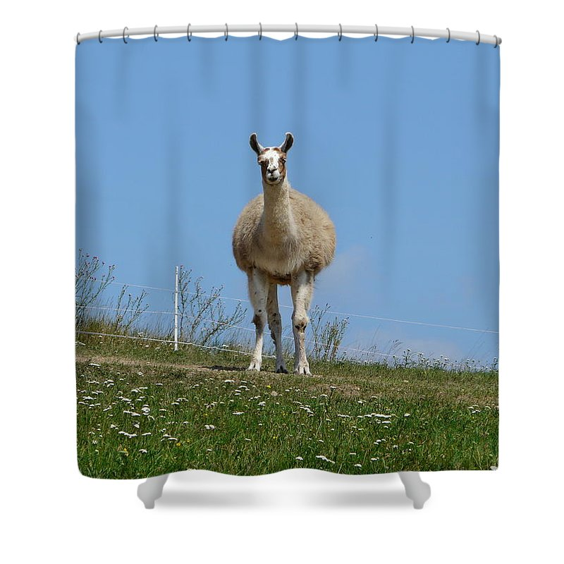 Lama Shower Curtain featuring the photograph Sentinel by Valerie Ornstein