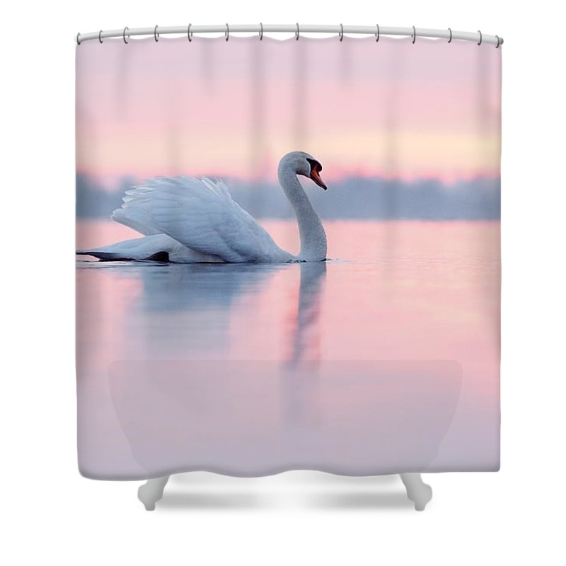 Mute Swan Shower Curtain Featuring The Photograph Serenity At Sunset By Roeselien Raimond