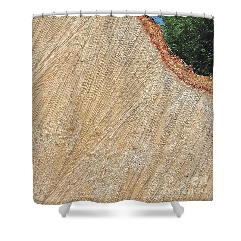 Tree Shower Curtain featuring the photograph Severed From Its Roots by Ann Horn