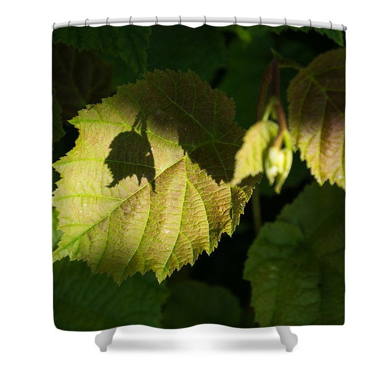 New Life Shower Curtain featuring the photograph Shadows Of New Life by Georgia Mizuleva