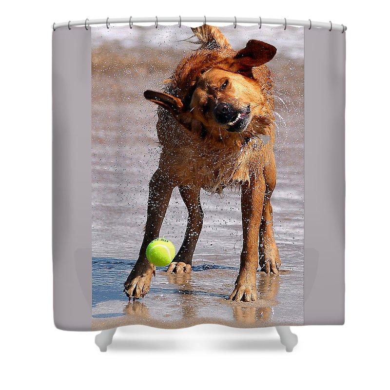 Dog Shower Curtain featuring the photograph Shake Shake Shake by Nadine Lewis
