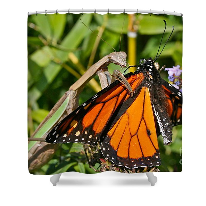 Mantis Shower Curtain featuring the photograph Shall We Dance by Rick Monyahan